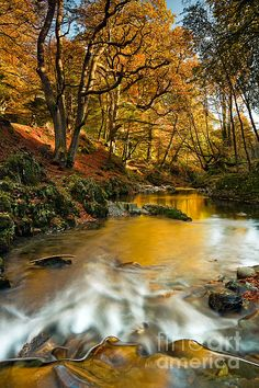 River Shimna, Tollymore Forest Park, County Down, Northern Ireland; photo by Derek Smyth