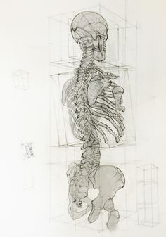 Jesús Guédez (Caracas, Venezuela) - Analytic Drawing, 2013 Drawings: Pencils on Paper skeleton #Frederic