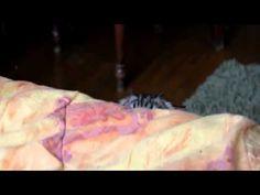 The Eye's Of Devil funny cat video