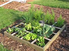 Simple, clean and efficient, Square Foot Gardening