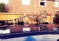 Lazy cat - Feb 2014