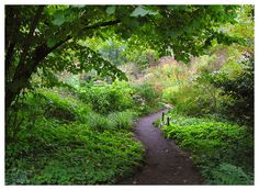 Mien Ruys, a lifetime in the garden. The Netherlands Love Garden, Shade Garden, Dream Garden, Garden Borders, Garden Paths, Garden Landscaping, Landscape Design, Garden Design, Landscape Drainage