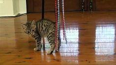 Funny Cute Kittens Playing and Having Fun http://ift.tt/1Wa1qHs