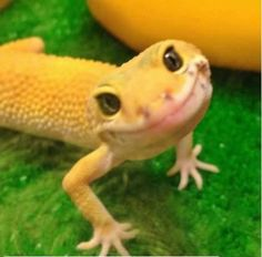 Happy lizard is smiling