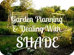 Garden Planning & Dealing With Shade  Most of us aren't blessed with wide open spaces.  Discover how you can still grow produce in areas that are shadowed by tall fences and large trees.  There's hope after all!