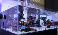 Rehype - 2011 Featured Nano Reefs - Featured Aquariums - Monthly Featured Nano Reef Aquarium Profiles - Nano-Reef.com Forums Nano Aquarium, Marine Aquarium, Reef Aquarium, Aquarium Fish Tank, Aquarium Ideas, Cool Fish Tanks, Saltwater Fish Tanks, Saltwater Aquarium, Freshwater Aquarium