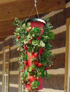 Hanging Upside Down Planters | The Topsy Turvy