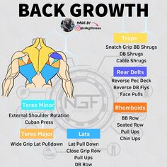 The lats are the largest muscle in the upper body and the widest muscle in the entire body. The traps consists of three muscles: lower, middle and upper trapezius. They are mostly involved in. Rowing Workout, Gym Workout Tips, Street Workout, Workout Challenge, Back And Bicep Workout, Biceps Workout, Muscle Up, Muscle Fitness, Build Muscle