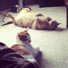 Cuse and Eli lazy days.