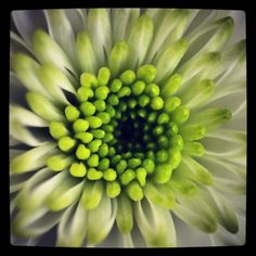 Ongelofelijk hoe mooi details van een bloem kunnen zijn.