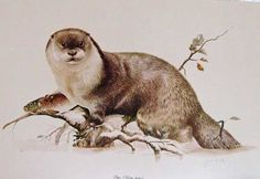 painting of otters | Otter by British artist Joel Kirk, this is # 841 of 950, signed by ...