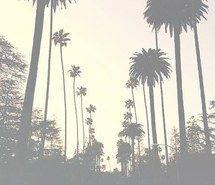 Inspiring image palms, summer #4683433 by winterkiss - Resolution 480x640px…