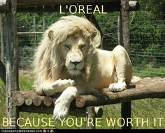 Funny Animal Captions - Animal Capshunz: Always Knew Lions were Sell Outs