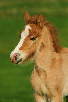 Pretty Little Horse