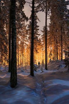 Snowy woods - Finland (by Mikko Lagerstedt) / NATURE