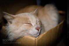 Feline... by eliasvidart #animals #animal #pet #pets #animales #animallovers #photooftheday #amazing #picoftheday