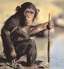 θηλαστικα για εργασια se kathgopies - Google Search Monkey, Google, Animals, Monkeys, Animales, Animaux, Animal Memes, Animal, Animais