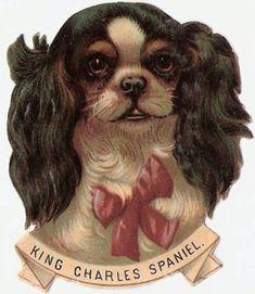 Vintage King Charles Spaniel Scrap