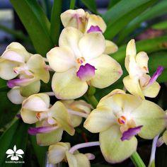 Orchideengarten Karge in Dahlenburg — #orchids #Orchidee #Orchideen #Orchideengarten...
