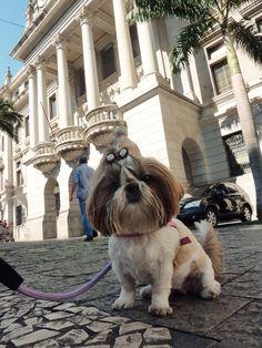 Pedrita em frente ao prédio da Faculdade de Direito da USP em SP