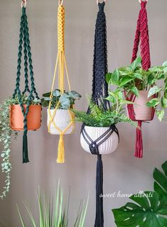 Macrame Plant Hanger Patterns, Macrame Plant Hangers, Macrame Patterns, Wall Plant Hanger, Pot Hanger, Sewing Room Organization, Unique Plants, Bold Colors, Micro Macrame