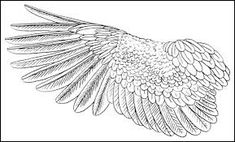 Image result for eagle wings