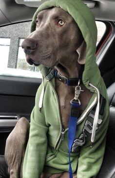 I don't have the names of my future kids picked out, but I do have a name for my future Weimaraner.