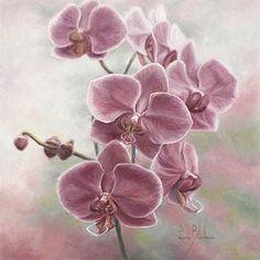 Elegant Orchids-FlowersbyLucieBilodeau
