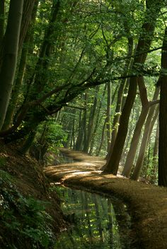 Forest Paths by ajn elemans The Ents loved the great trees and the wild woods and the slopes of the high hills and they drank of the mountainstreams and ate only such fru. Forest Path, Tree Forest, Magical Forest, Forest Trail, Dark Forest, Beautiful World, Beautiful Places, Landscape Photography, Nature Photography
