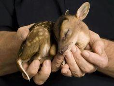 Bambi ♡