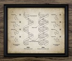 Vintage DNA & RNA Print - Genetic Code - Double Helix - Biology Science Illustration - Printable Art - Single Print #623 - Instant Download by InstantGraphics on Etsy https://www.etsy.com/listing/269780718/vintage-dna-rna-print-genetic-code
