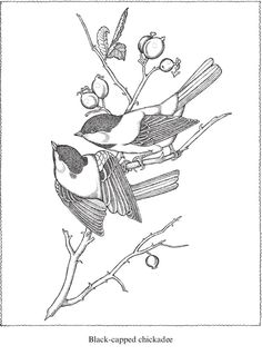 Welcome to Dover Publications Creative Haven Audubon Birds