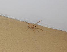 עקרבוט!!! אני אוכל עקרבים ובגלל זה לא הורגים אותי. לו רק הייתי גם יפה