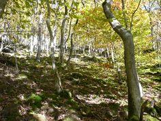 ...jeder Waldabschnitt sieht anders aus und überzeugt mit seiner vollen Pracht...