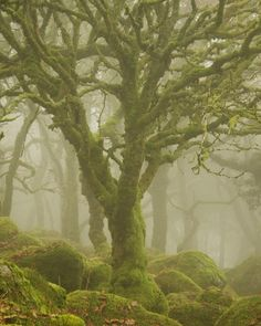 Complexity by duncan george on 500px #nature #landscape #england #forest #dartmoor #mist