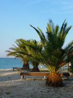 Palmen op het strand van Altidona