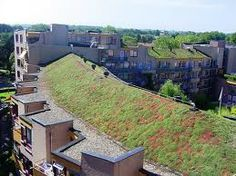 van vliet buitenruimte dak - groen dak - groenedaken http://www.vanvliet-groenvoorziening.nl/ - pinned by @dakwaarde - roofvalue
