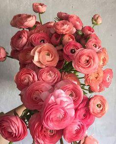 Roses Pink, Tea Roses, Pink Peonies, Yellow Roses, Fresh Flowers, Spring Flowers, Beautiful Flowers, Exotic Flowers, Purple Flowers