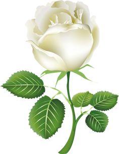 """Photo from album """"Ruže"""" on Yandex. White Rose Png, White Roses, Flower Images, Flower Pictures, Flower Frame, Flower Art, Trees To Plant, Plant Leaves, Rose Flower Wallpaper"""