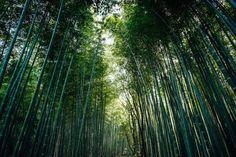 bamboo wood in Japan