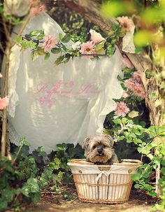 Romantic Rose Paintings, scrap book Cd, shabby note cards and more by Artist Jo-Anne Coletti Pink Love, Pink And Green, Shabby Vintage, Shabby Chic, Yorshire Terrier, Little Boy Names, Vintage Rosen, Fleur Design, Rose Cottage