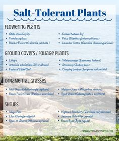 Gardening - Choosing Plants & Adding Beach Style to your Landscape Salt-Tolerant Plants for Seaside Gardening Good to know for mailbox garden!Salt-Tolerant Plants for Seaside Gardening Good to know for mailbox garden!