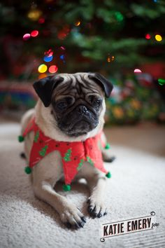 my pug!  (c) Katie Emery Photography... B would need something a little more girly