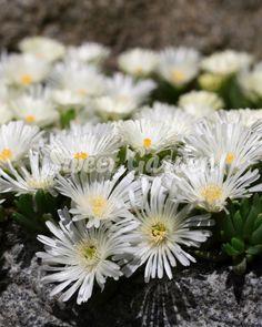 Garden, Flowers, Plants, Gardening Tips