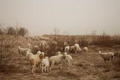 Uit de fotoserie 'The Chinese Dust Bowl'. Foto: Benoit Aquin