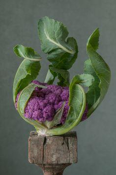 Purple Cauliflower by Lynn Karlin