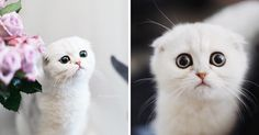 This Kitty Is Constantly Embarrased And No One Knows Why | Bored Panda