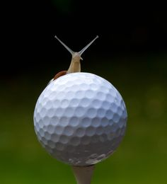 Might be a little slow teeing off......that looks like a snail!   - by Geoff Curtis, via 500px