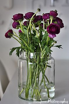 MRS JONES Green Ideas, Flower Power, Vases, Flower Arrangements, Orchids, Beautiful Homes, Glass Vase, Interior Design, Plants