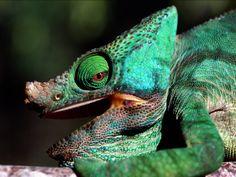 reptiles - Google Search